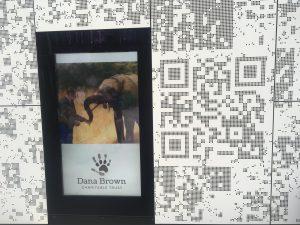 dana-brown-charitable-trust-elephant