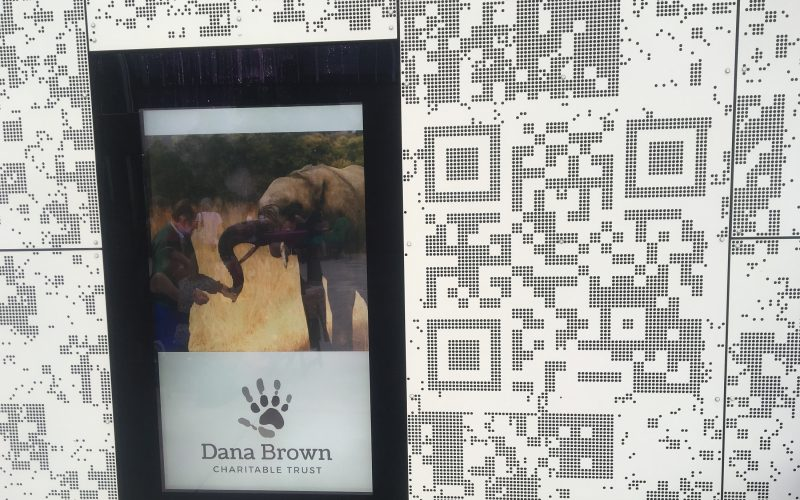 dana-brown-charitable-trust-elephant